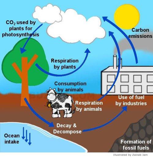 carbon dioxide intake of oceans essay